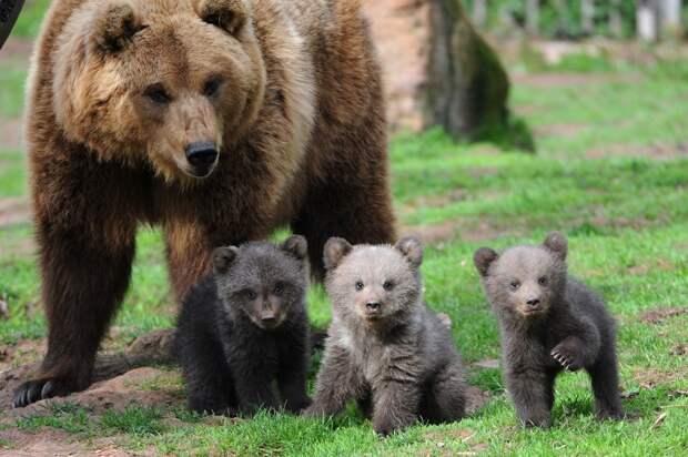 zivotnye za mai 2014 1 ned 10 Лучшие фотографии животных со всего мира за неделю