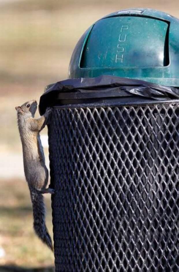 Белка - добытчица (7 фото)
