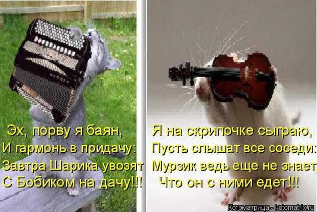 Котоматрица: Эх, порву я баян,       Я на скрипочке сыграю, И гармонь в придачу:    Пусть слышат все соседи: Завтра Шарика увозят  Мурзик ведь еще не знает, С Бо