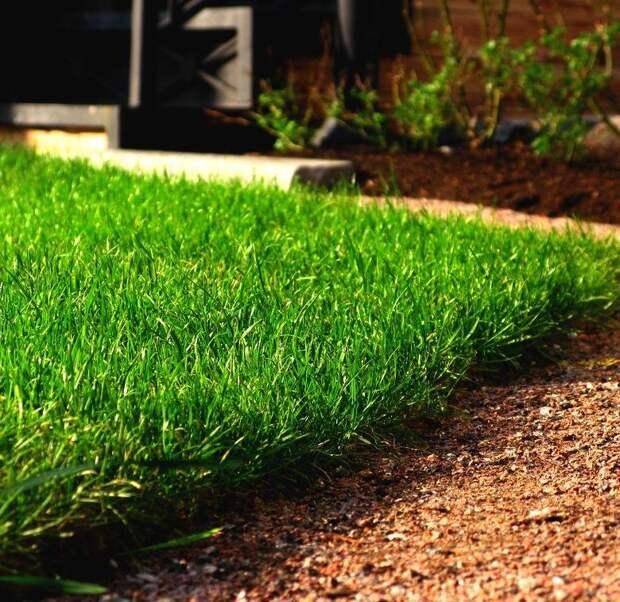 Интересный простой способ для озеленения лужайки или мини-газона