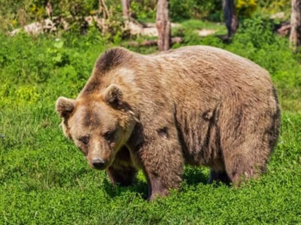В красноярском нацпарке медведь напал на туристов и убил подростка