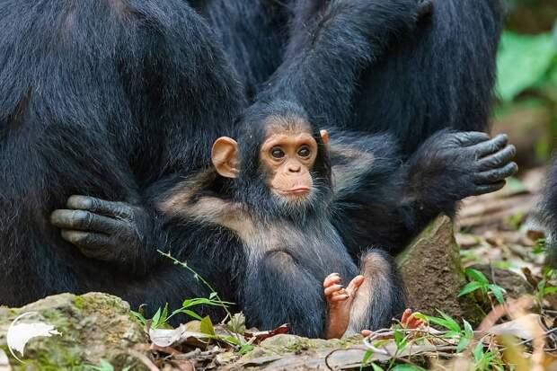 9 умилительных фото детенышей животных