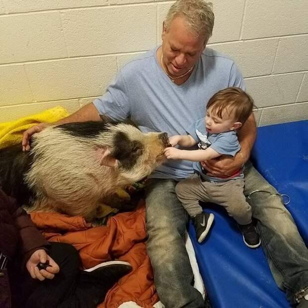 Чарльз пока лечится в ветеринарной клинике, но Холмсы ежедневно навещают его  животные, питомец, пожар, хряк
