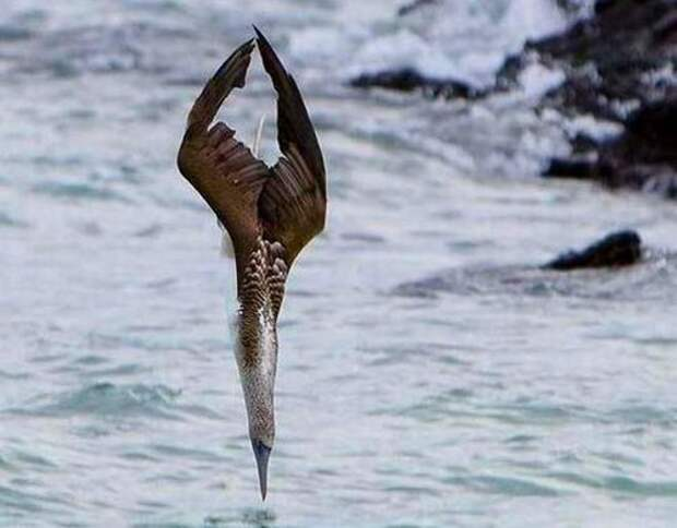 Альбатрос-птица-Описание-образ-жизни-и-виды-альбатроса-8