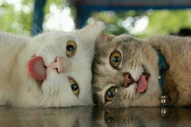 Веселые приколы с котами (11 фото)
