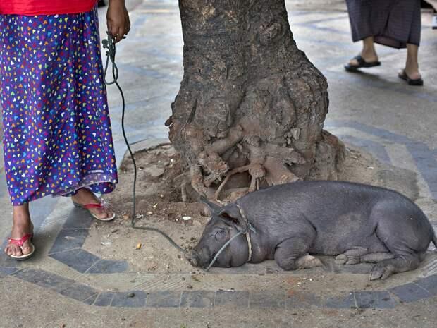 zivotnye za mai 2014 1 ned 1 Лучшие фотографии животных со всего мира за неделю