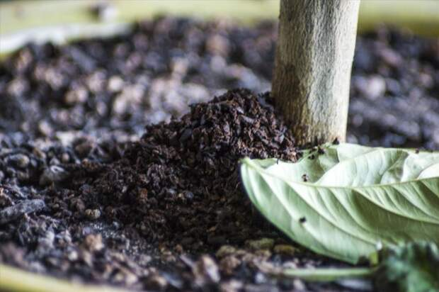 Кофейная гуща эффективно действует против вредителей. /Фото: incroyable.co
