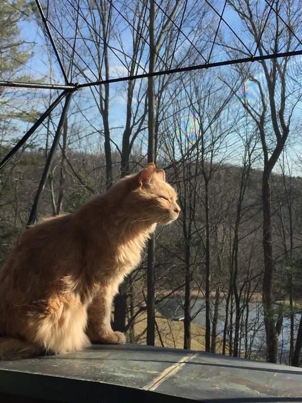 Мой 21-летний кот наслаждается солнечным осенним днем... животные, котики, лучи, погреться, солнечные ванны, солнце, температура, тепло