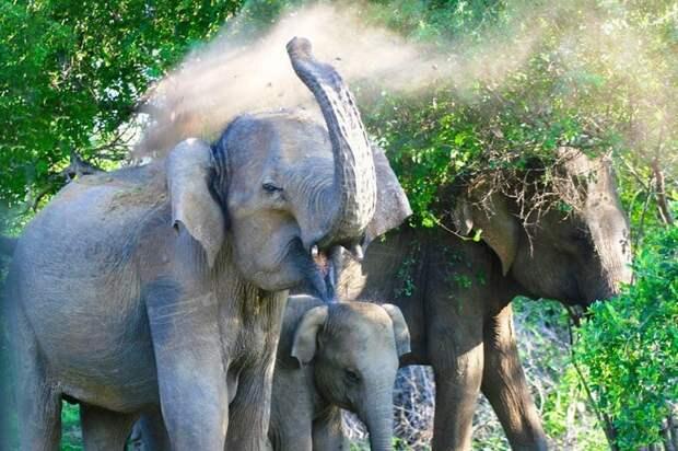 2. Слоны помнят всё МИФ И ПРАВДА, животные, животный мир, интересные факты, миф, познавательно, факты о животных
