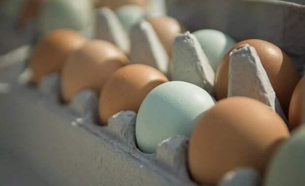 Вильфанд рассказал о необычном способе приготовления яиц на жаре