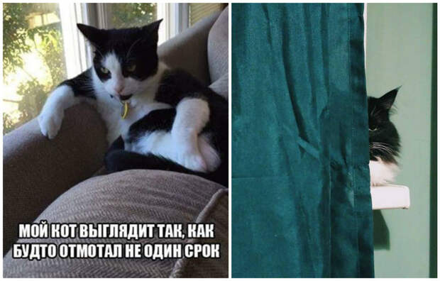 Они присматривают за нами интересное, коты, смешное