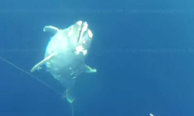 В Чёрном море обнаружили кладбище убитых дельфинов. Видео