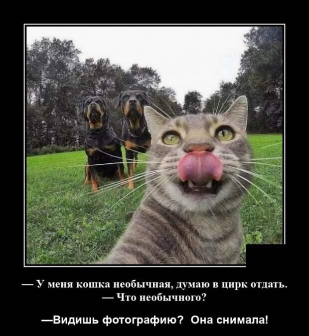 Демотиватор про кота и собак