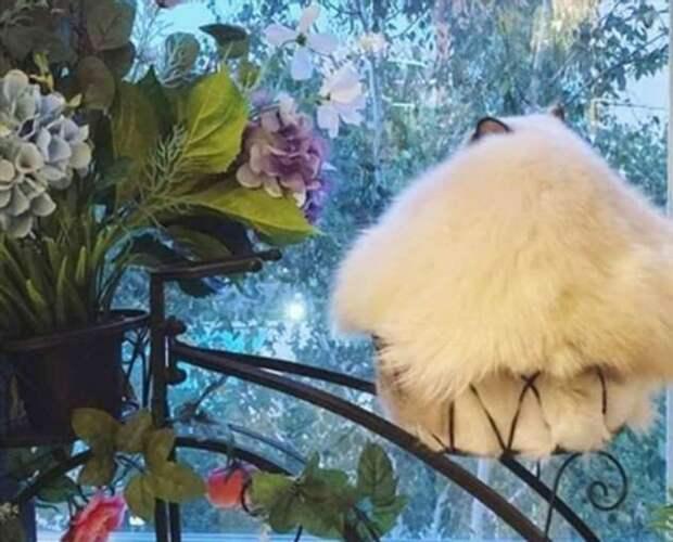 18 кошачьих морд, которые уснули в самых немыслимых местах