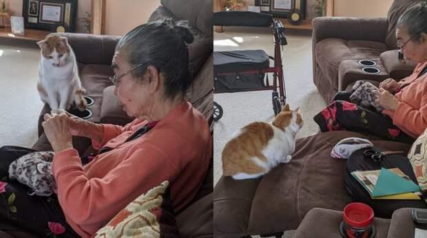 Фото о любви между животными и людьми