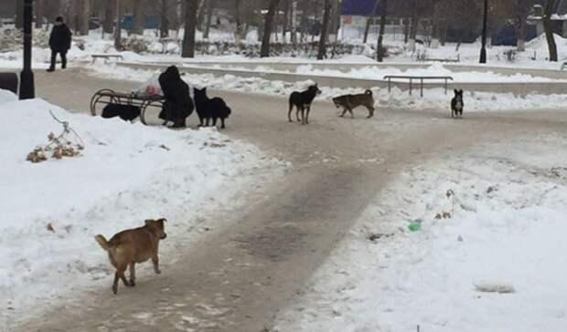 Бездомные собаки в парке им. Гуськова в Оренбурге не дают прохода