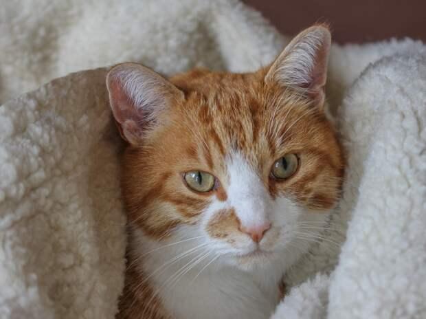 В китайском Ухане коронавирус обнаружили у кошек