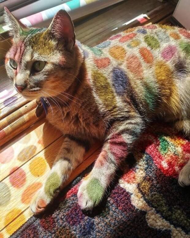Мама украсила дверь пасхальными наклейками... В результате кошка выглядит как персонаж из мультика животные, котики, лучи, погреться, солнечные ванны, солнце, температура, тепло