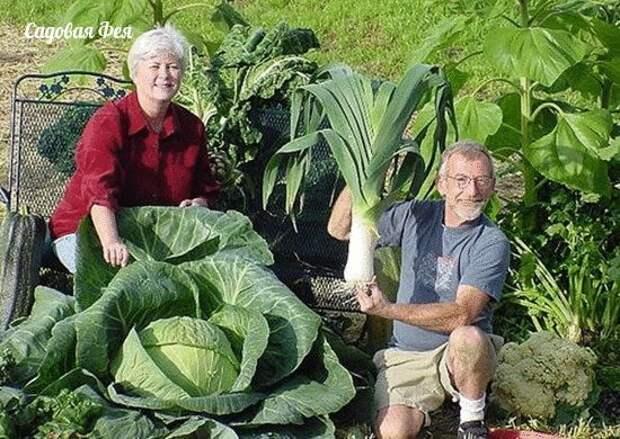 Маленькие огородные секреты и хитрости для садоводов и огородников
