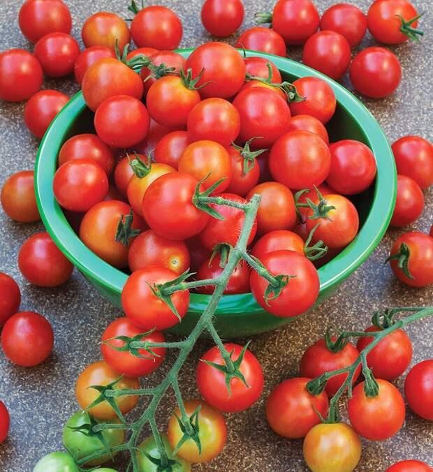 Картинки по запросу помидоры рапунцель