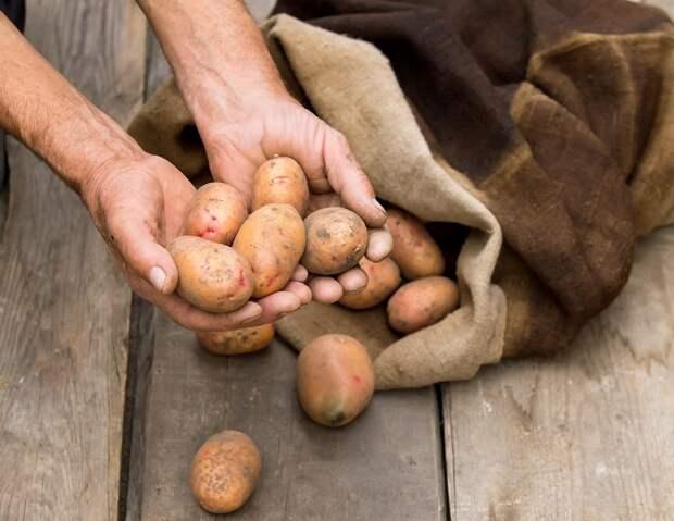 суп из картофеля и моркови