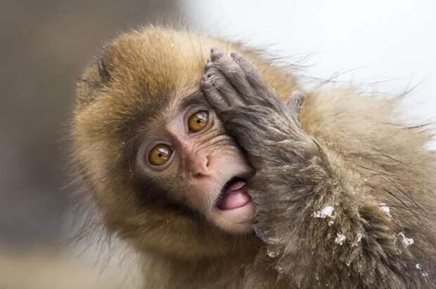 В Ялте обезьяны напали на туристов – отобрали мобильный телефон и оттаскали за волосы