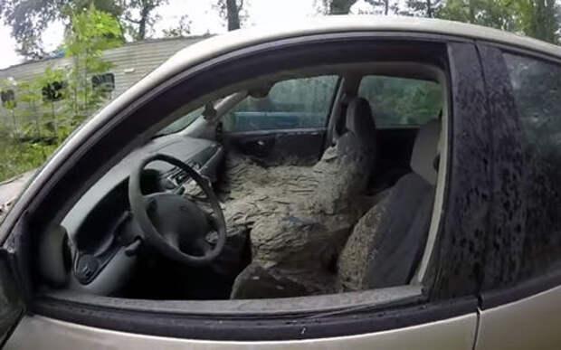 Осы в автомобиле: 3 жутковатых видео