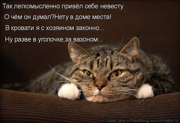 1474017253_kotomatricy-18