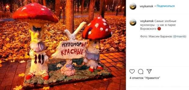 Фото дня: хмурые мухоморы в парке имени Воровского
