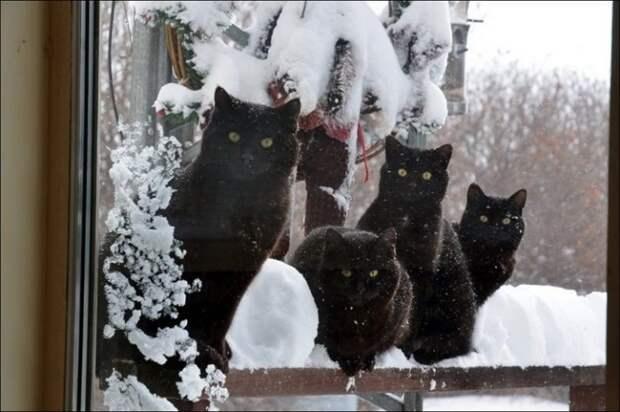 13 забавных фото котиков в снегу