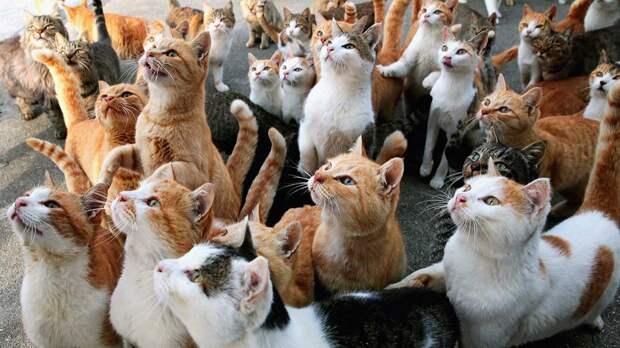 Самые опасные породы кошек назвали специалисты