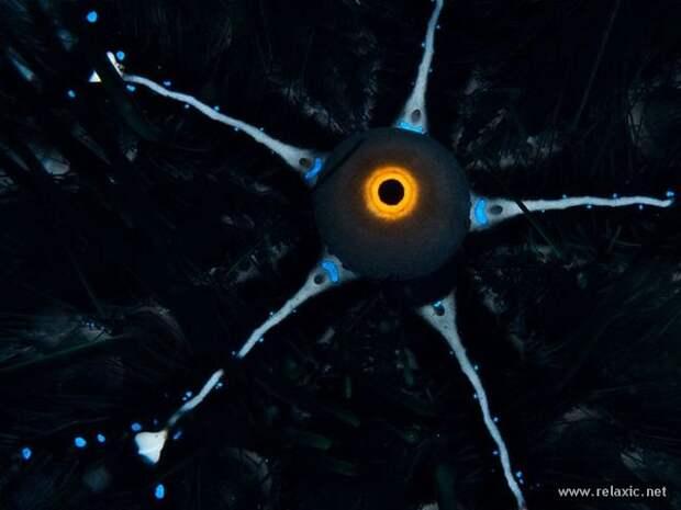 underwater_047