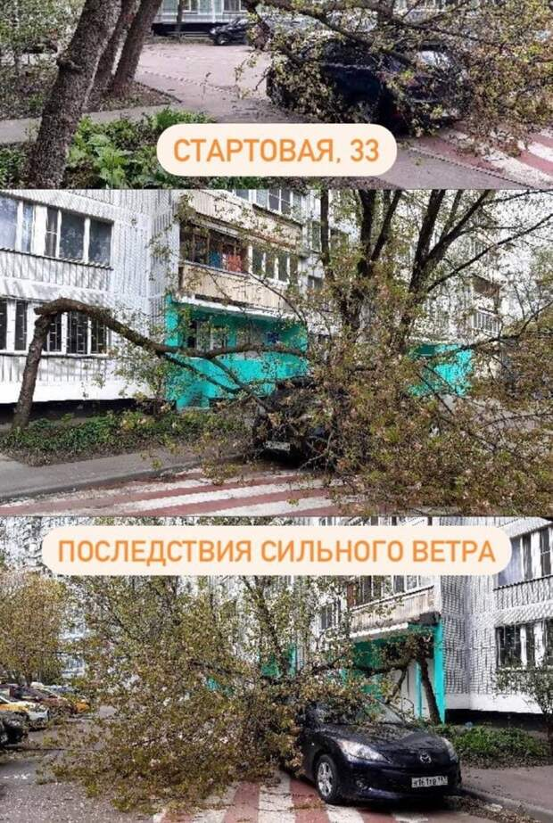 На Стартовой дерево упало на автомобиль