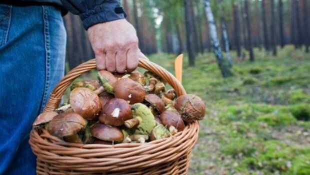 В Нижегородской области обнаружили четыре случая отравления грибами