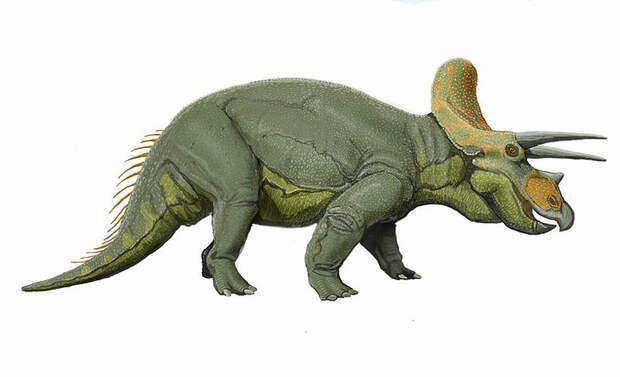 Динозавр из Новой Гвинеи