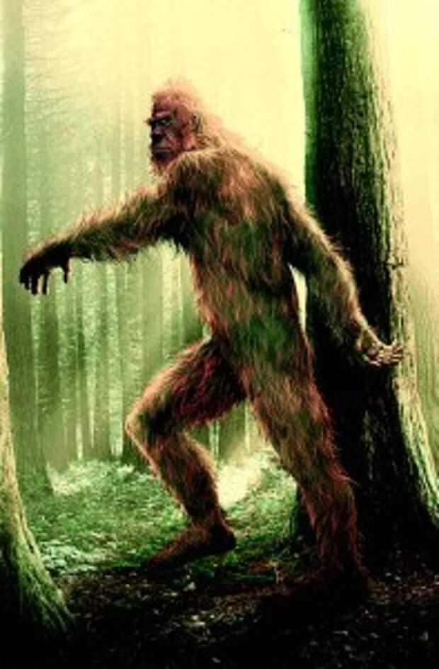 Лесной человек по описаниям похож на йети