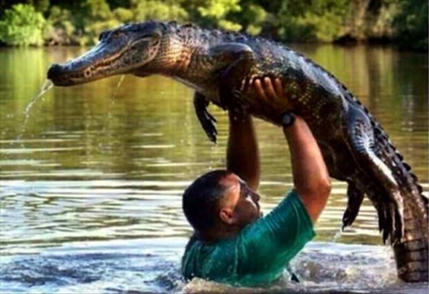 Безудержное веселье с крокодилом.