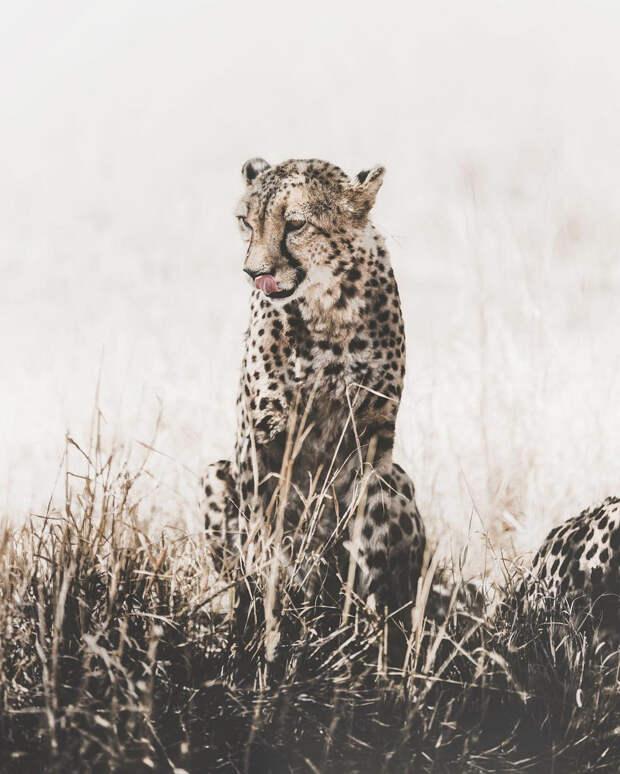 Когда дикая природа вызывает восторг. Фотограф Донал Бойд 17