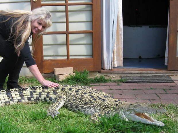 ТЕРЕМОК. Домашние...крокодилы