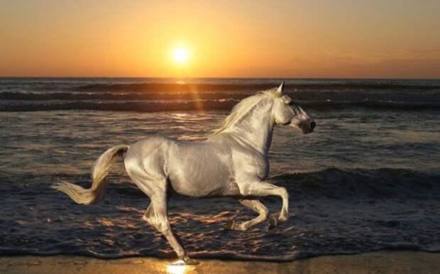 Красота лошадей в фотографиях (27 фото)