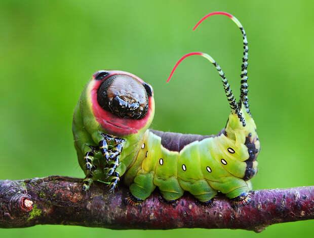 caterpillar-moth-butterfly-before-after-metamorphosis-21-2
