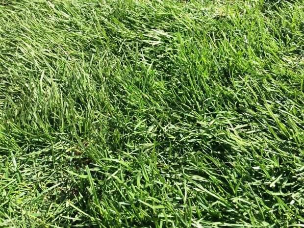 Рулонный газон: все, что вы хотели знать о выборе, укладке и уходе