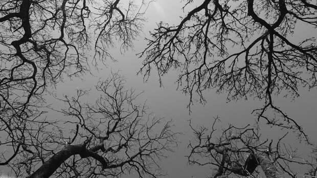 Деревья, Ветви, Небо, Лес, Серый, Темно