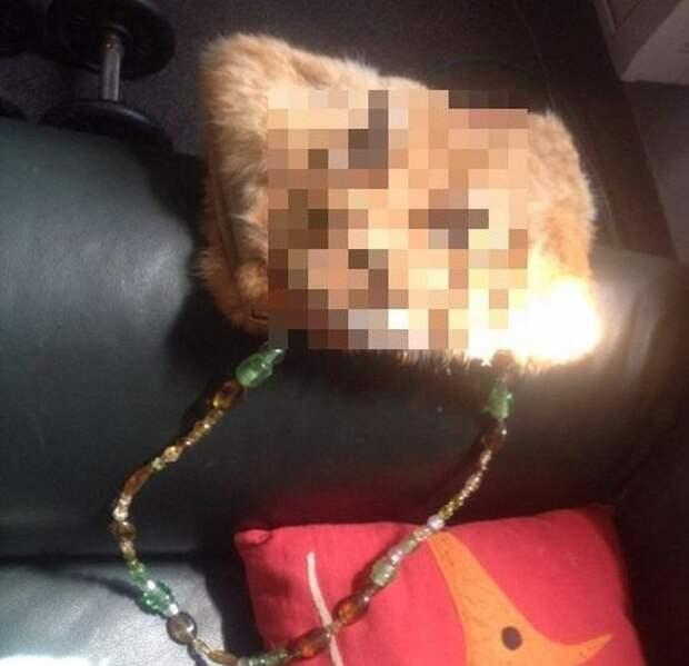 Жесть: сумка из кошки за 1400 долларов