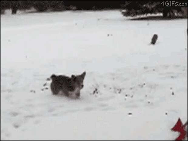 животные, зима, милота, позитив, снег