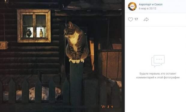 Фото дня: вечерние развлечения кота в поселке Художников
