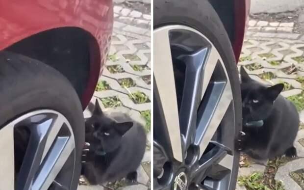 «Можно ехать»: кот провел тест летней резины перед поездкой