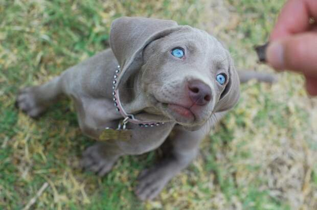 Этот малыш, который не представляет, что у него самые красивые в мире глаза домашний питомец, животные, милота, мимими, собака