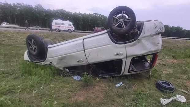 Клещ стал причиной серьезной аварии на трассе в Приморье