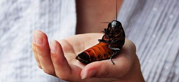 Доброта спасет мир: ветеринар из Таиланда взялся лечить таракана, на которого наступили на дороге